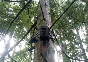infrared night vision trail camera used to identify Kraal
