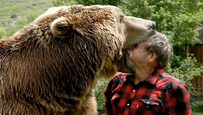 Trained grizzly bear