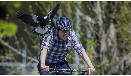 Surviving a wild animal encounter while biking (Pt. 2) - Danger Down Under