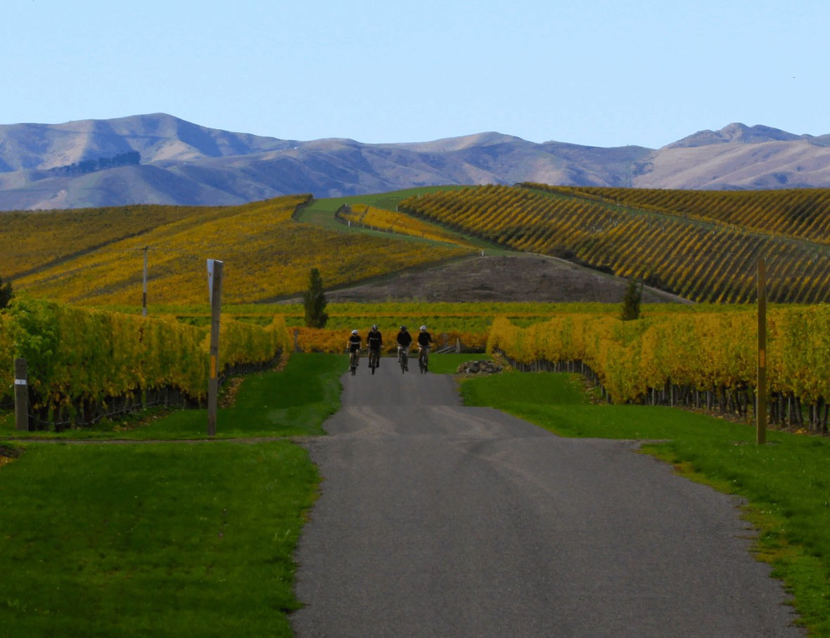 Cyclists riding in vineyard country