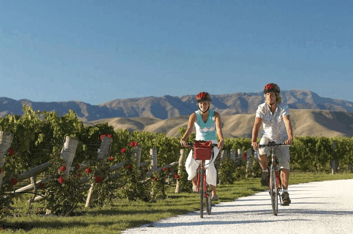 Couple on bikes riding past vineyards
